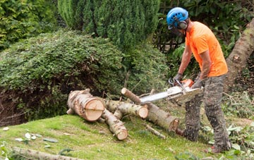 additional services offered by Bath tree surgeons