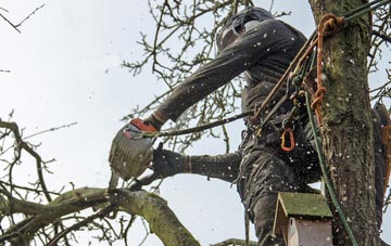 the process of removing dead wood from Bath trees