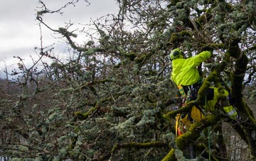 experienced Bath arborists are needed