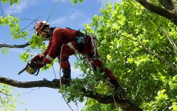 find trusted rated Bath tree surgeons in Somerset