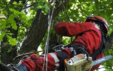 hiring professional Bath tree surgeons