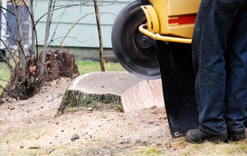 rated Bath tree stump removal companies