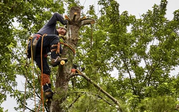 tree surgeon Bath, Somerset