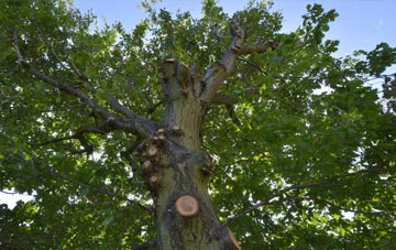 what is Bath tree surgery?