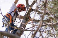 trusted Somerset tree dead-wooding services