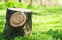 Bath tree stump removal services
