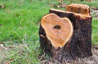 free Bath tree stump removal quotes