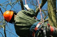 free Bath tree surgeon quotes